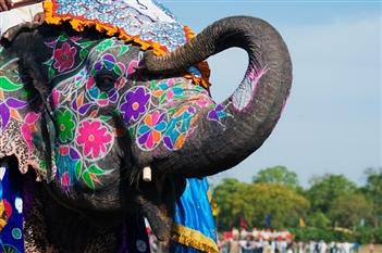 INDIA si RAJASTHAN 2020 - plecare din TIMISOARA - Delhi